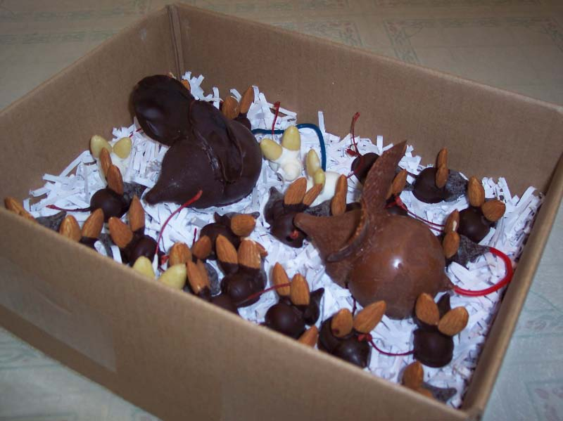 These chocolate mice were placed in a box to simulate an environment suited for mice.