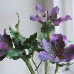 Purple Alstroemerias 2