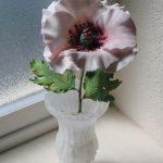 White Sugar Poppy