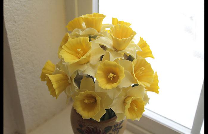 Daffodil 3 699px