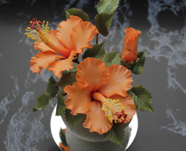 Orange Hibiscus px
