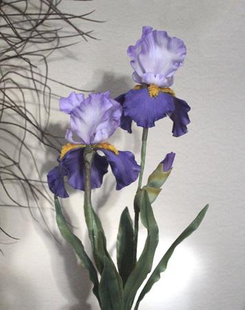 Purple Iris 450px